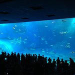 Photo de Okinawa Churaumi Aquarium
