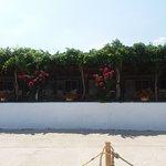 Photo of Zephyros Apartments
