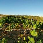 #chianti view from Borgo Argenina