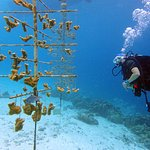 Taking a look at the Buddy Reef coral restoration nursery