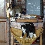 Het Oud Arsenaal local residents