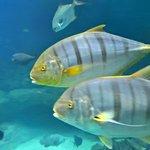 Photo de National Marine Aquarium