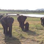 Heritance Kandalama Foto