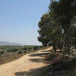 in der Nähe des Zippori National Parks.