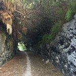 Bermuda Railway Trail Foto