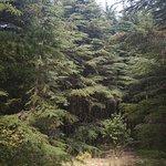 Al-Shouf Cedar Nature Reserve Foto