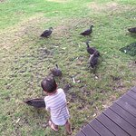 Feeding the ducks from our cabin