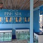 το fish spa του ξενοδοχείου όπως φαίνονται από την είσοδο.Για 15min massage μόνο 6 ευρώ