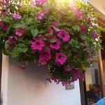Photo of Frittolino Gardenia