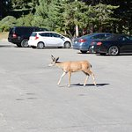 Animals on the parking lot in front of your room