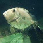 Billede af Nordsøen Oceanarium