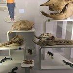 Muséum d'Histoire naturelle (Museum of Natural History) Foto