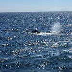 Hyannis Whale Watcher Cruises Foto