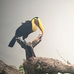 Photo of Greentique Costa Rica Tours