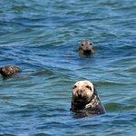 Monomoy Island Excursions Photo