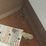 Foto de Motel 6 St. Louis-Bridgeton