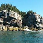 Shipstern Island near Milbridge, Maine