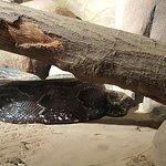 Foto di Jacksonville Zoo & Gardens