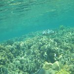 Be careful in the shallower areas where the coral is close to the surface