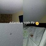 SPIDER ... HAD 2 LITTLE GIRLS AGES 9 & 3... SCARED TO DEATH... THIS WAS THE 10 FLR !!!