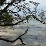 Photo de Cahuita National Park