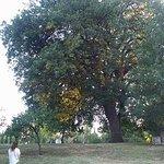 FB_IMG_1471846194520_large.jpg