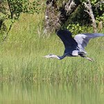 A heron we saw on our trip