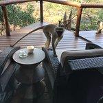 Photo de Shishangeni Private Lodge