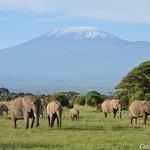Breathtaking view of Mt.Kilimanjaro