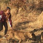 Foto de Walking with Lions at Victoria Falls