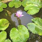 Anantara Vacation Club Phuket Mai Khao Foto