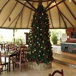 Anche in Amazzonia arriva il Natale