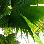 Botanischer Garten Foto