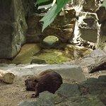 Foto de National Zoological Park