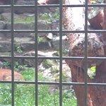 Tier- und Freizeitpark Germendorf Foto