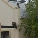 Birdlife Langeberg Guest Lodge