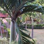 Photo of Lovina Beach Hotel