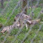 Lakota Wolf Preserve Foto