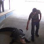 L'animateur et l'aligator