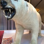 Polar Bear in the reception area.