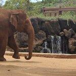 Honolulu Zoo Foto