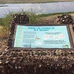 Foto de Observation Hill