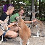 kangaroo photobomb :)