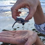 Baby Turtle Release; on the beach in front of the Westin Lagunamar