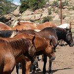 Tarryall River Ranch Foto
