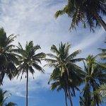 Paradise Cove Lodges Foto