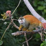 Squirrel Monkey visiting