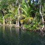 Indian River Foto