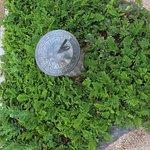 Cambria Pines Lodge Resmi