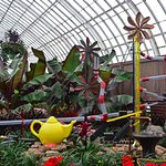 Summer at the Conservatory